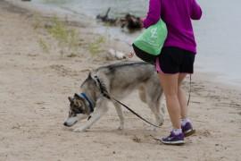 米国ニュースサイトが報じる身近にある犬にとって危険(毒)なもの