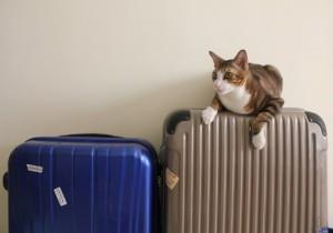 ペット(犬・猫)と海外移住!飛行機でペットと海外へ行く方法