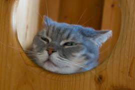 九州でおすすめ猫カフェ(福岡、佐賀、熊本、宮崎)