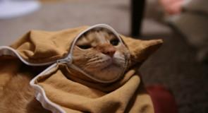 ペットが病気の時、飼い主も精神的に苦しむことが証明される