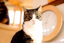 仙台でおすすめの猫カフェ3選