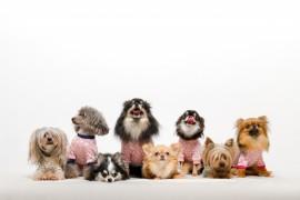 「犬のインフルエンザ」猫にも影響を与える可能性がある?