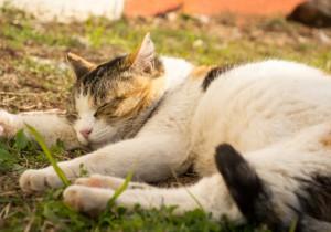 睡眠は大事!猫は一日どれくらい寝るのか?