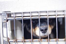 殺処分ゼロを目指す!ペット保護に力を入れている団体、施設