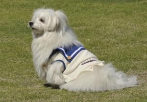 【犬初心者必見】初めて犬を飼う前に準備・揃えておきたい道具