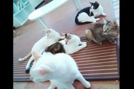 猫島情報!香川県佐柳島特集!