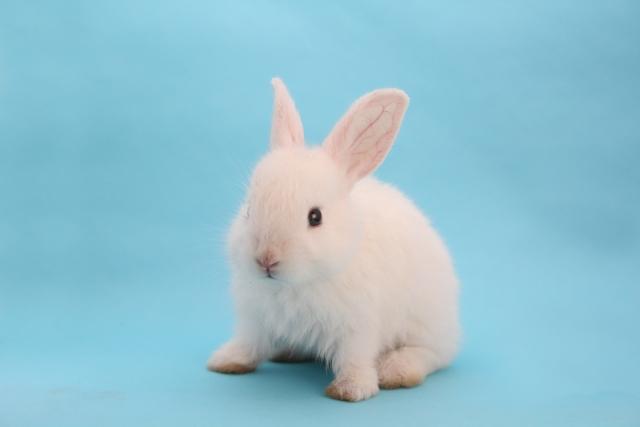 ウサギの画像 p1_32