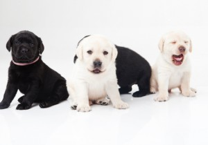 愛犬のための病院選びのコツ