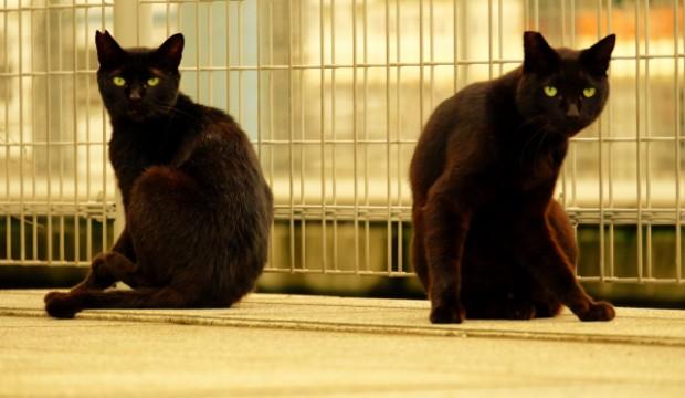 マンハッタンにある猫の収容所でインフルエンザが大発生