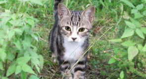猫ひっかき病―あなたは危険にさらされている!?