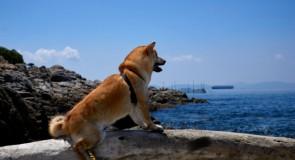 犬の予防接種の種類と必要な値段
