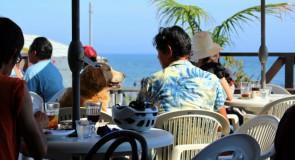 伊豆で犬と一緒に入れるお勧めのカフェ5選