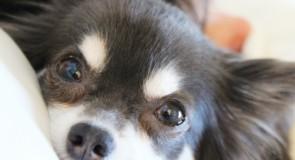 アメリカのメリーランド州で犬や猫の販売を禁止する法律を制定。