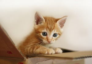 有名猫ブログ紹介(猫とグリーンと暮らす家、ひだまり日和、うちの猫がまた変なことしてる。)