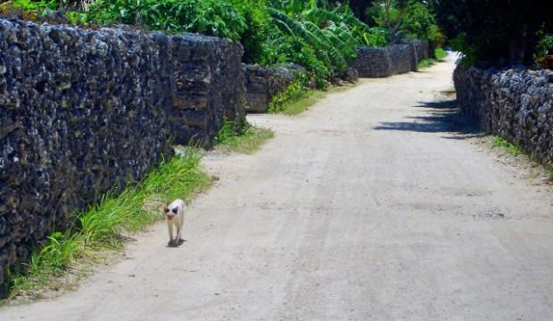 沖縄の猫島!竹富島の詳細