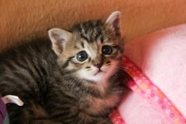 猫が急いでフードを食べて吐いてしまうのを防ぐ方法