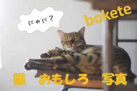 不覚にも笑ってしまった、めちゃめちゃおもろい猫画像7選(bokete編)