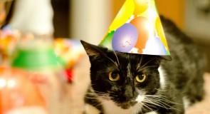 猫と暮らせる物件7選(関東編)