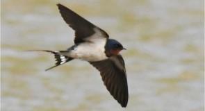 メキシコシティの鳥は、ヒナ鳥を守るためにタバコの吸い殻を拾う?!