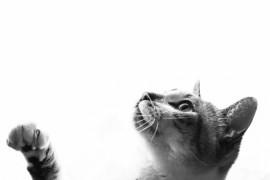 オススメ!猫の尿路結石用サプリメント7選