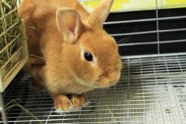 ウサギの値段はいくら?相場を調べてみた。