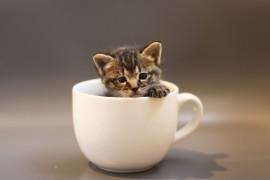 神奈川県でおすすめな猫カフェ5選