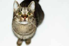 猫の耳掃除の方法