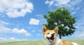 福岡県で評判の良い動物病院5選