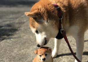 犬に薬を飲ませる方法(錠剤編)